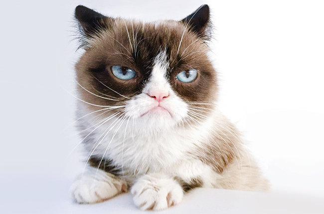 grumpy-cat-bb28-2015-billboard-650